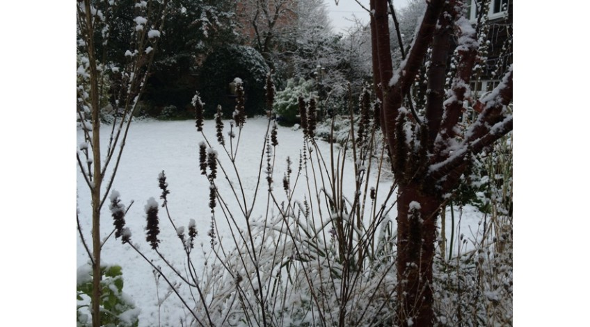 Antony's Garden in winter