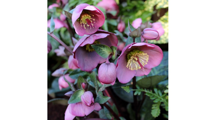 Antony's Garden tips for January