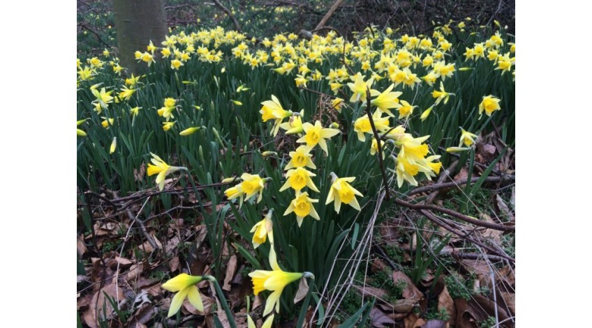 Antony's Garden tips for March
