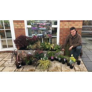 Antony's Gardening Tips - Evergreen Low Maintenance Border