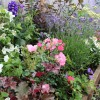 English Cottage Border