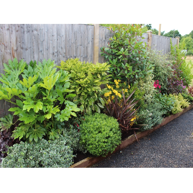 Evergreen low maintenance border for Easy to maintain bushes
