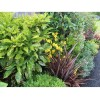 Evergreen Low Maintenance Border