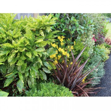 Evergreen Easy Care Border