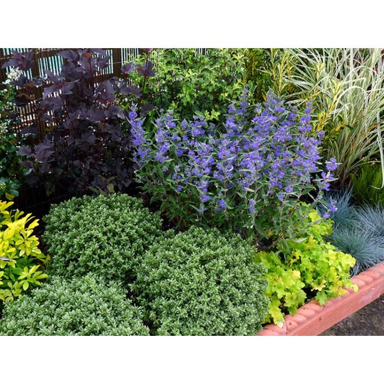 Evergreen low maintenance border for Low maintenance evergreen shrubs