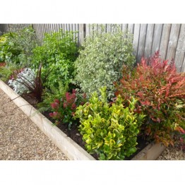 Evergreen Winter Border