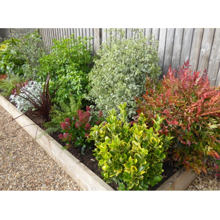 The winter border for Low maintenance winter plants