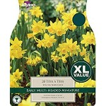 Narcissi 'Tete A Tete' (Pack of 20)