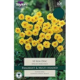Narcissi 'Sun Disc' (Pack of 10)