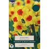 Narcissi 'Falconet' (Pack of 8)