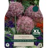 Allium 'Christophii' (Pack of 15)
