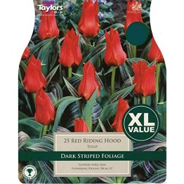 Tulip 'Red Riding Hood' (Pack of 25)