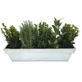 Antony's Evergreen Planter